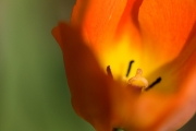 Blomst 3 til skærm