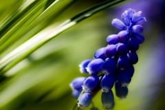 Blomst 2